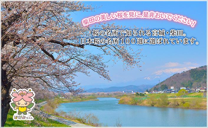 桜の名所で知られる宮城・柴田。日本桜の名所100選に選ばれています。柴田の美しい桜を見に、ぜひおいでください!